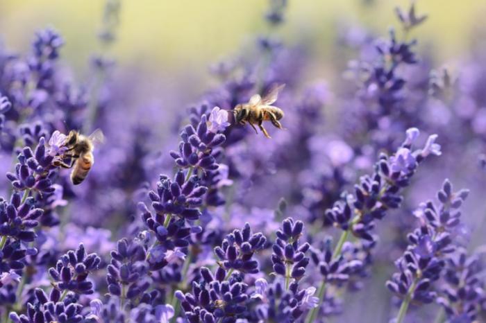 Ученые из США разработали новый способ защиты медоносных пчёл от инфекций и паразитов