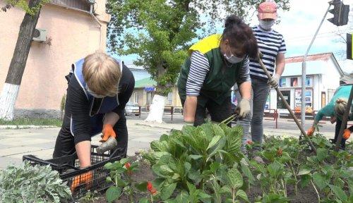 В Бельцах приступили к высадке цветов